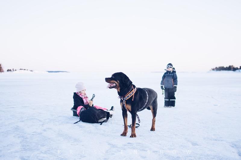 lenkillä meren jäällä