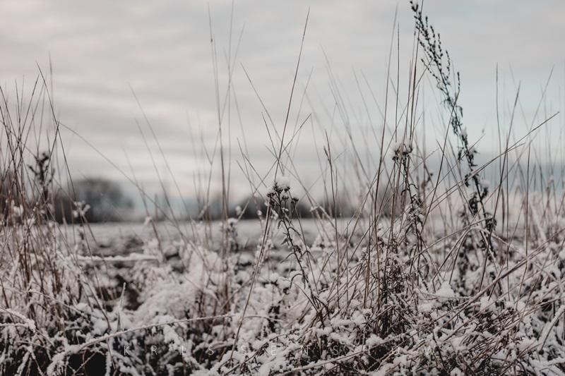 luminen pelto